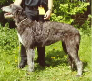 Baylind Fable Best Puppy in Show